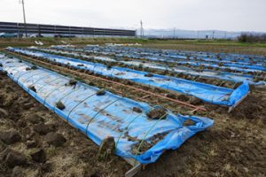 山形米作り苗代