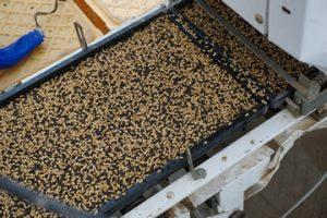山形米作り種まき