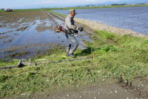 田植えのための草刈り