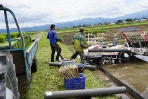 田んぼの雑草対策